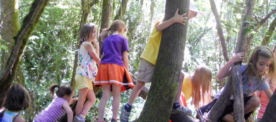 tryon-creek-summer-camp-friendship-stewardship-climbing.jpg