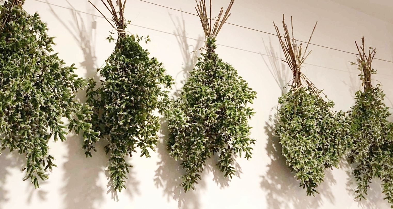 Bundle them up in small batches and hang to dry for a week or two.
