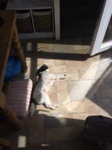 Ted Sunbathing Saturday 25.07.15