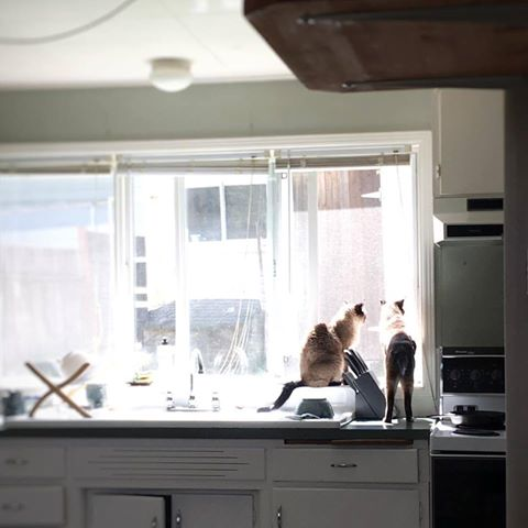 appreciation-of-space-nothing-is-ordinarycats-in-the-kitchen.jpg