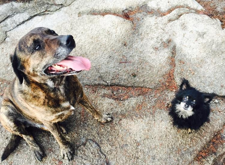 Klara's fur family, Nelson, BC