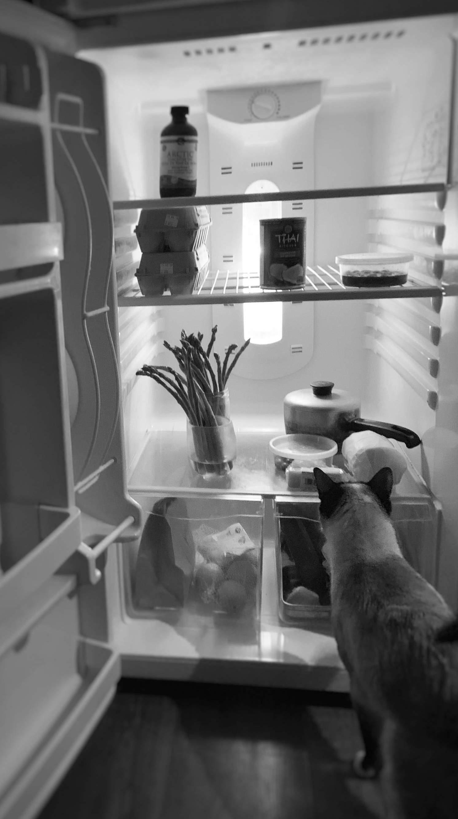 LingDao checks the fridge situation