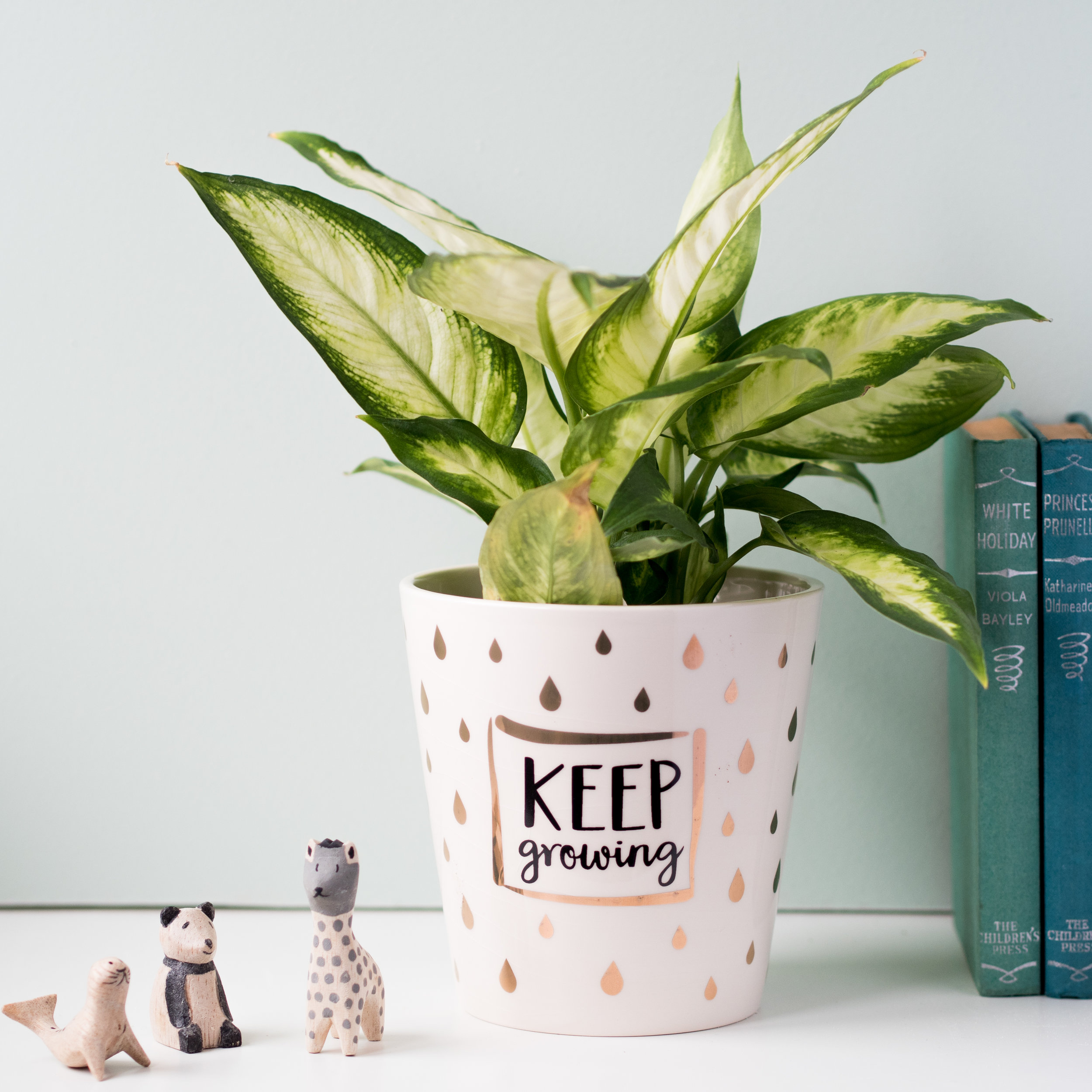 plant pot cover  sc 1 st  Bow Boutique & Keep Growing Plant Pot Cover \u2014 Bow Boutique Ltd.