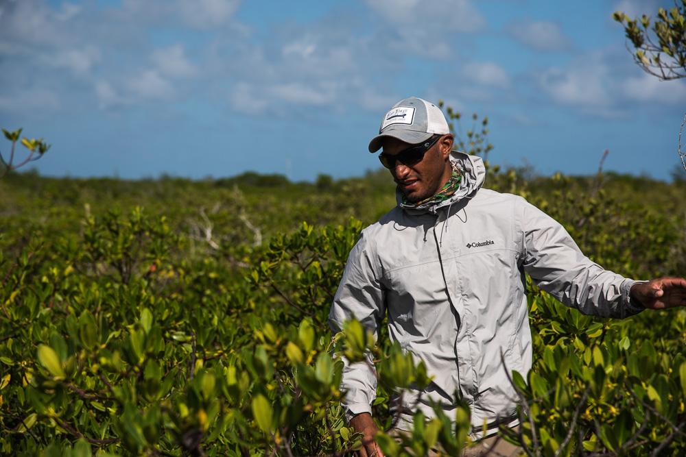 Mangrove Deliveries