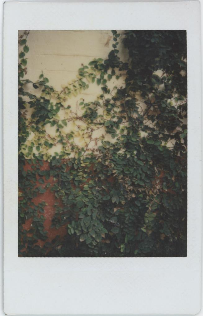 Polaroids KDMT 8.jpeg