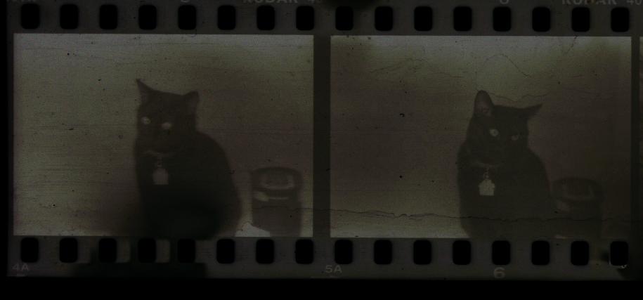 2 black cats aint good.jpg
