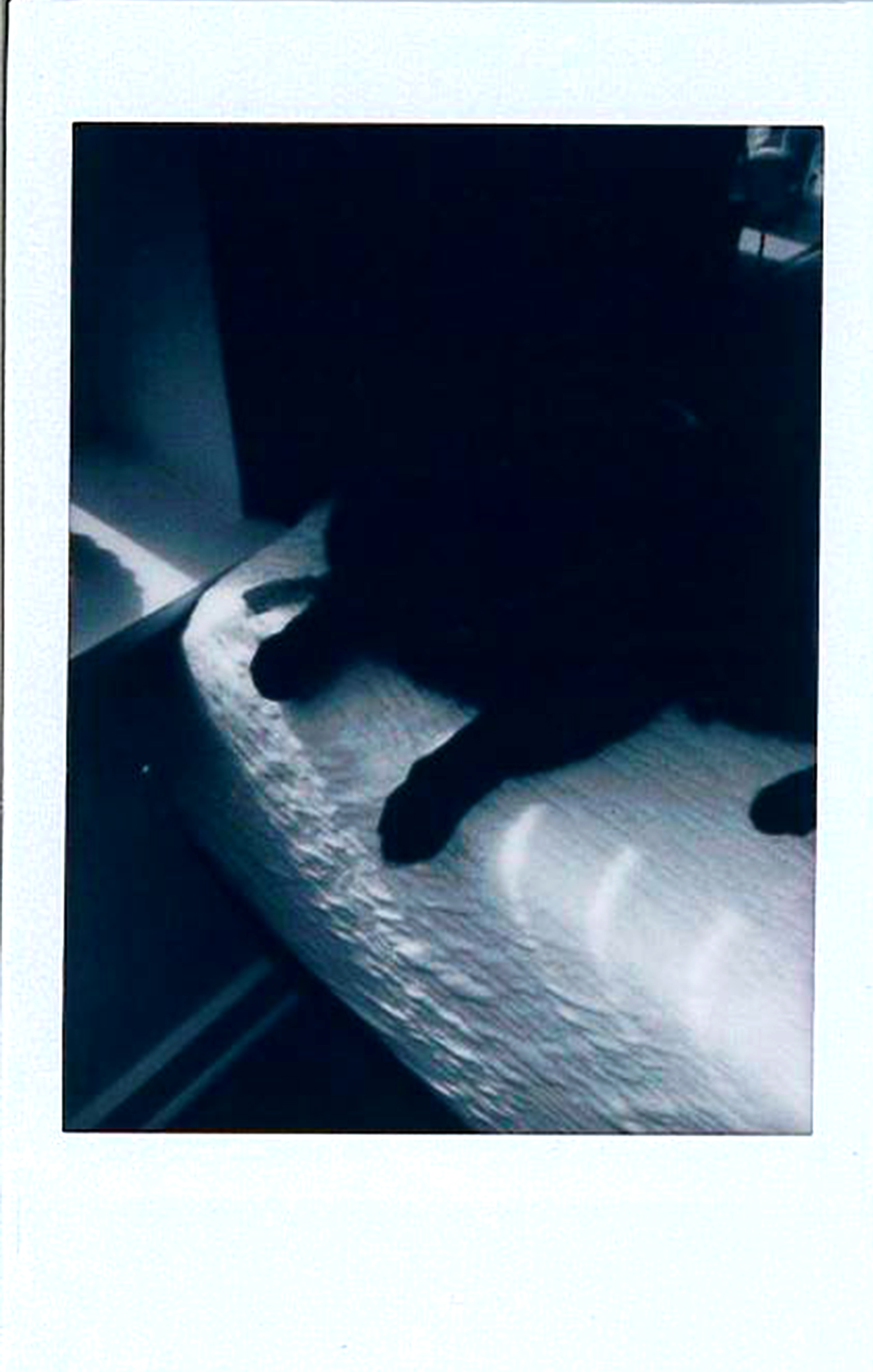 Hallow Cat.jpg