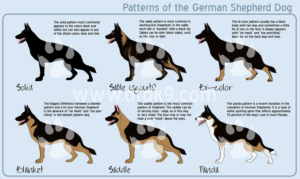 © Dogs for Defense K-9 - www.dfdk9.com