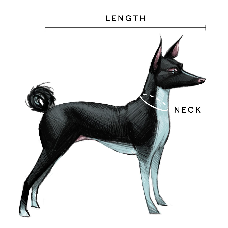 Medium-Dog_2-novecento-mdm-no-chest.png