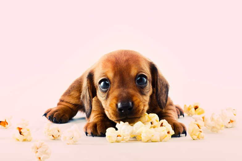 Jaxx+Hound+Pupcorn.jpg