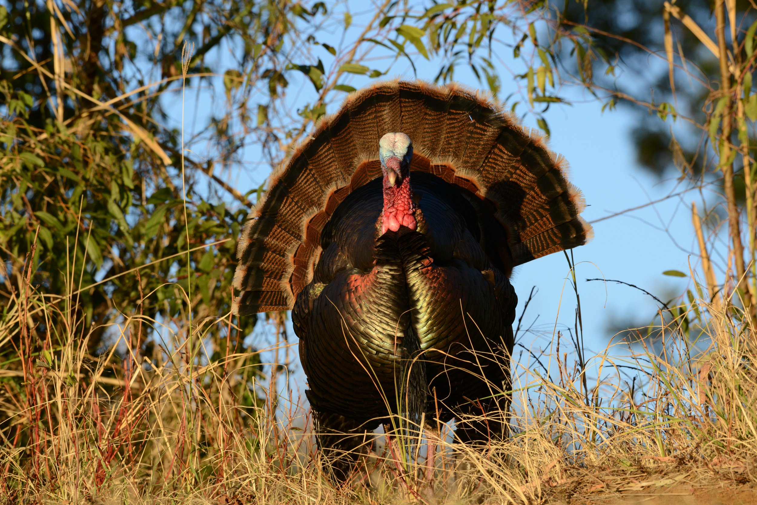 Makani Turkey 1.JPG