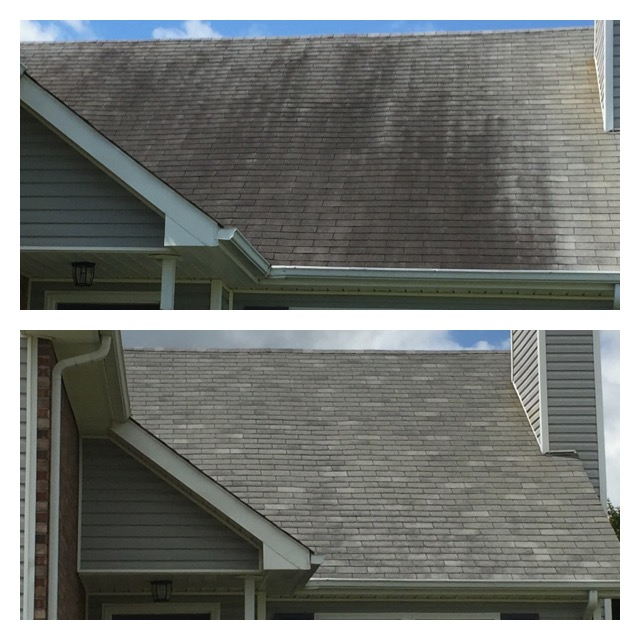 Roof Stains Removed