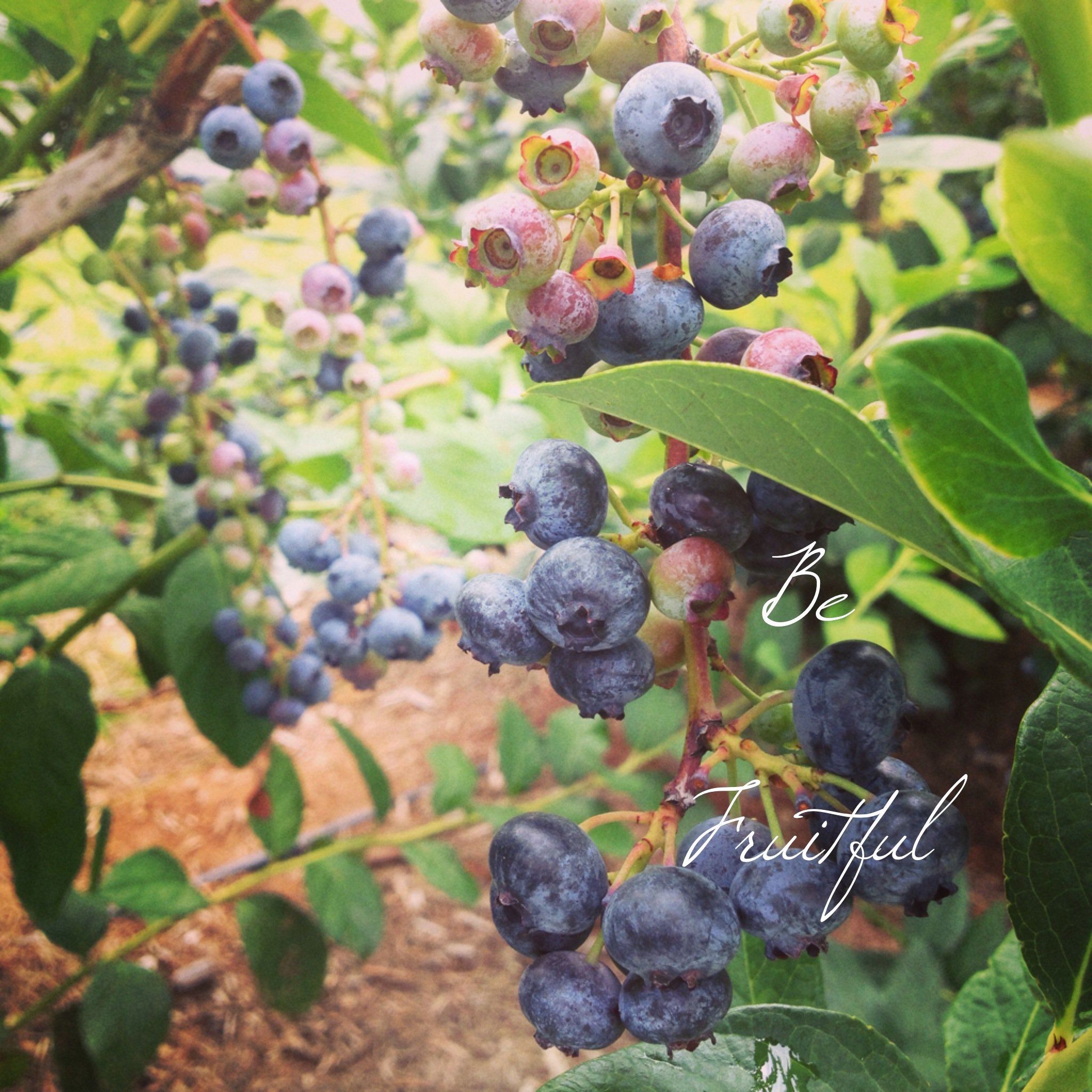 be-fruitful.jpg