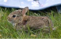 WSWS PS_bunny.jpg