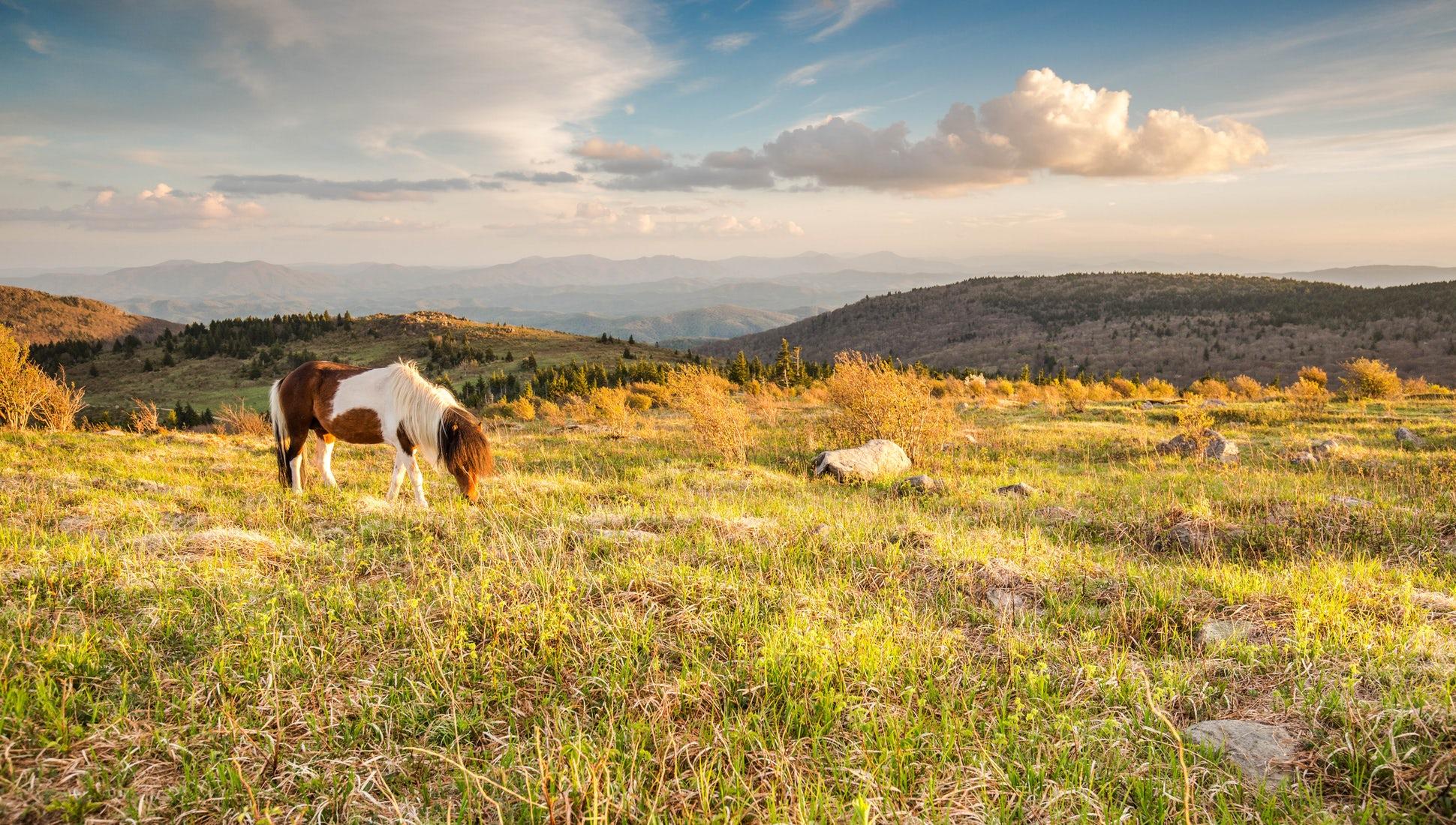 AT ponies.jpg