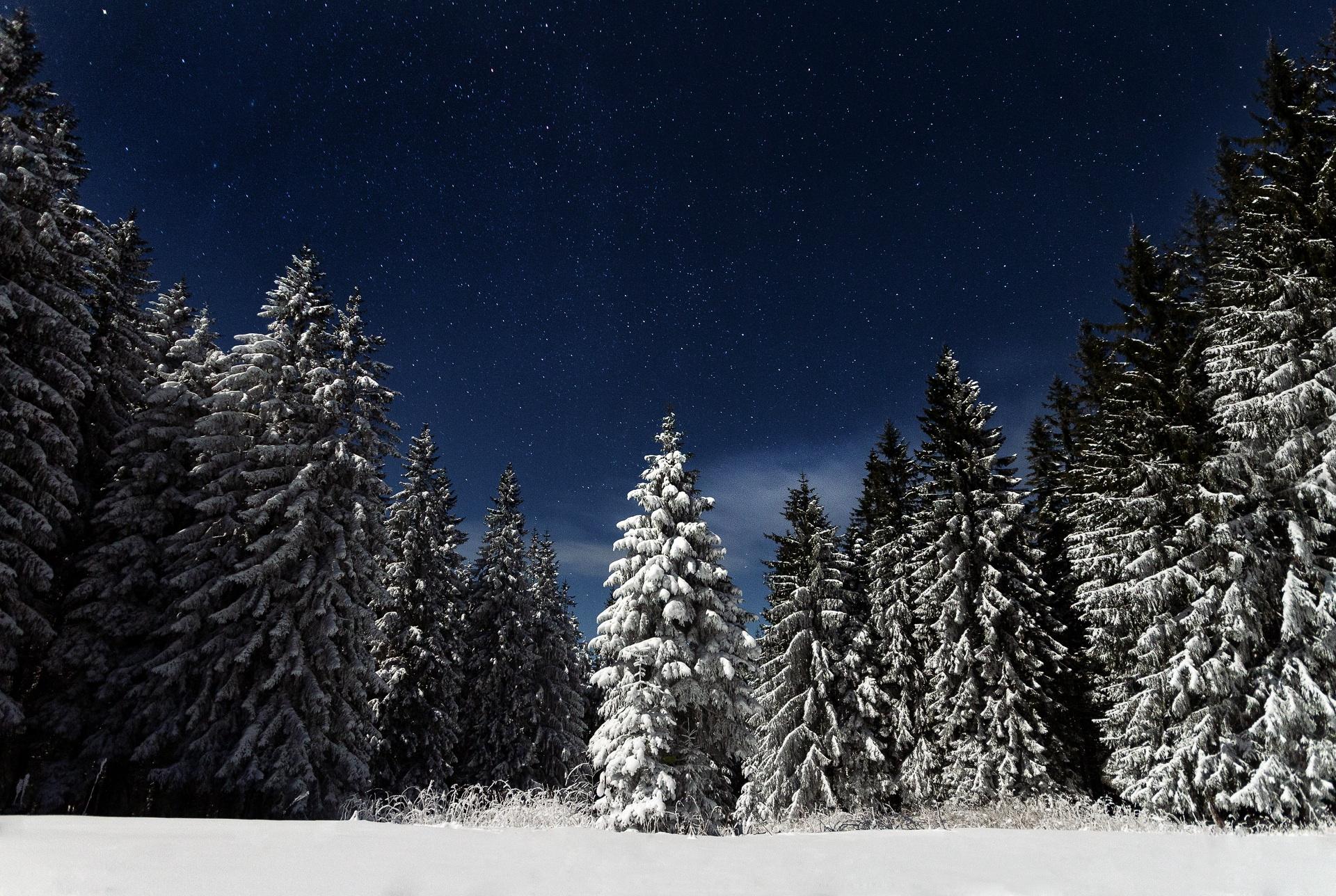 tree-forest-mountain-snow-winter-sky-24266-pxhere.com.jpg
