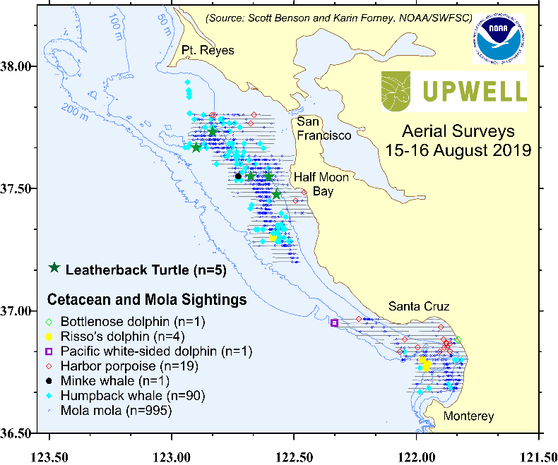 Aerial surveys of marine turtles and mammals between Monterey Bay and San Francisco, CA during 15-16 August.
