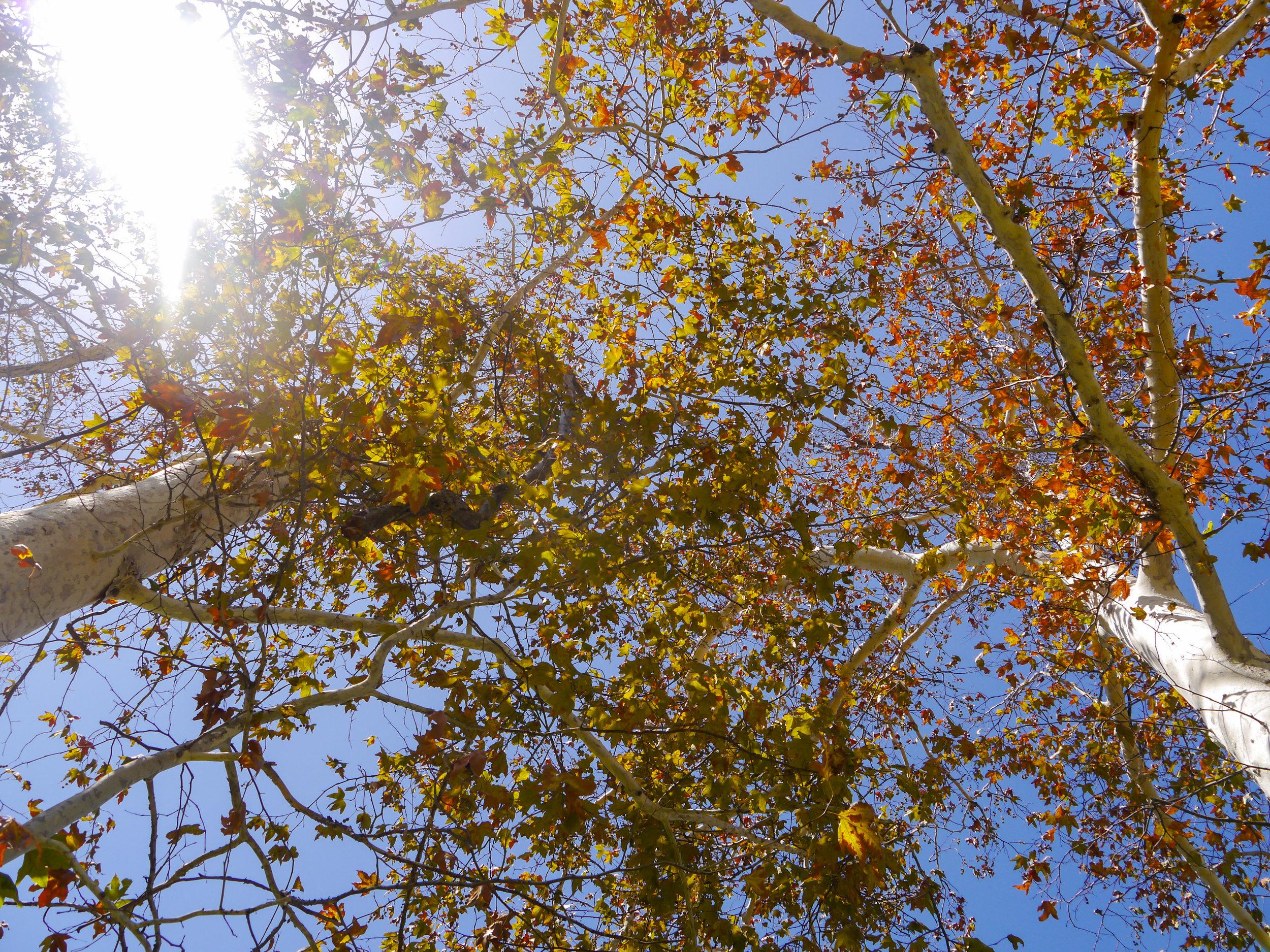 treepeople.jpg