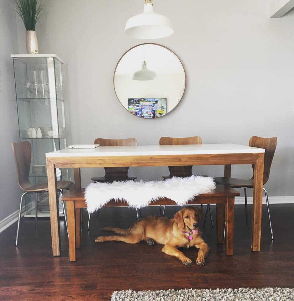 Golden Retriever Mid- Century Modern Dining Room.jpg