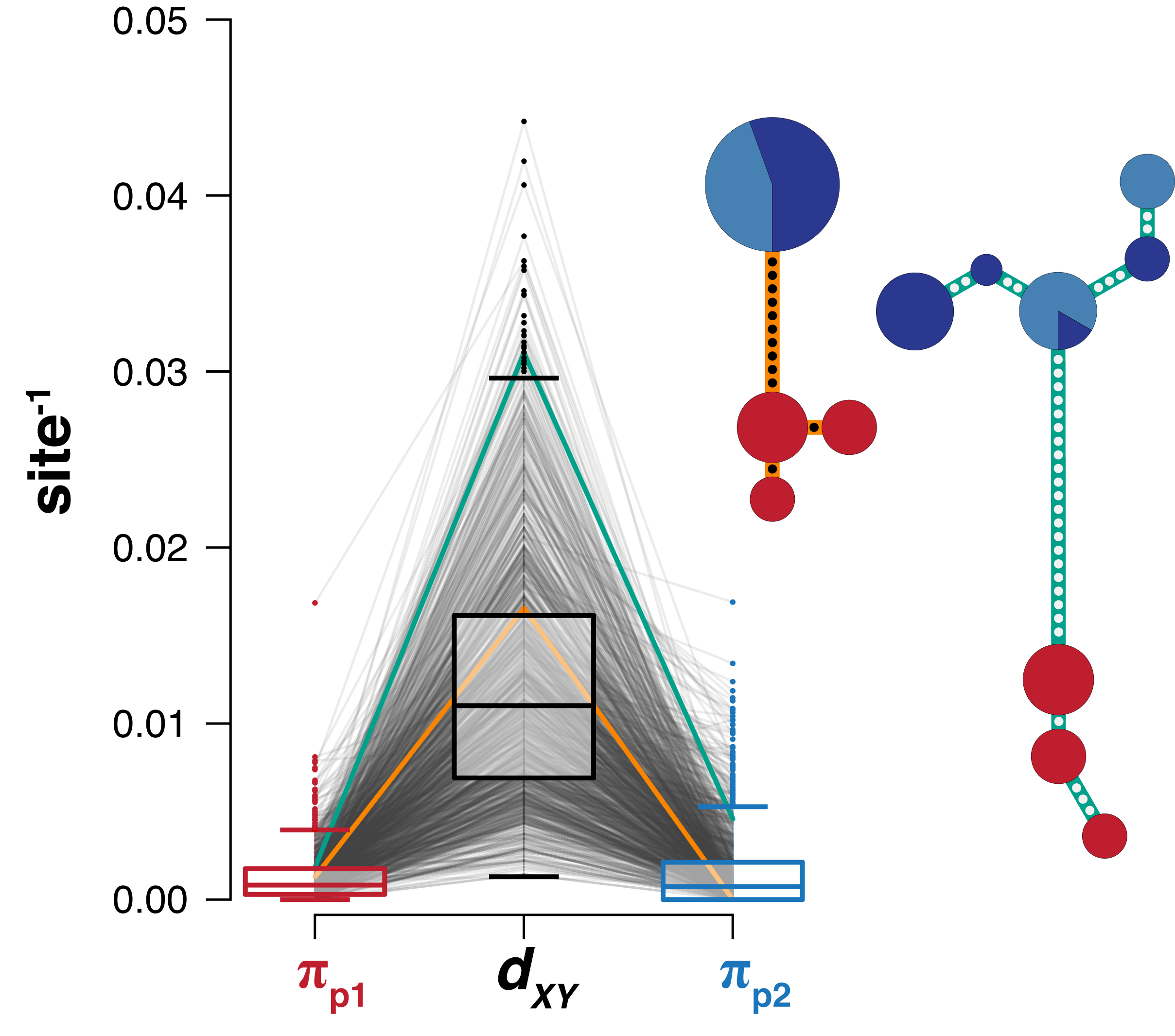 Genetic diversity (π) and divergence (DXY) at RAD loci associated with stickleback habitat type (blue: freshwater, Red: marine). See our preprint on  bioRxiv  for more details!