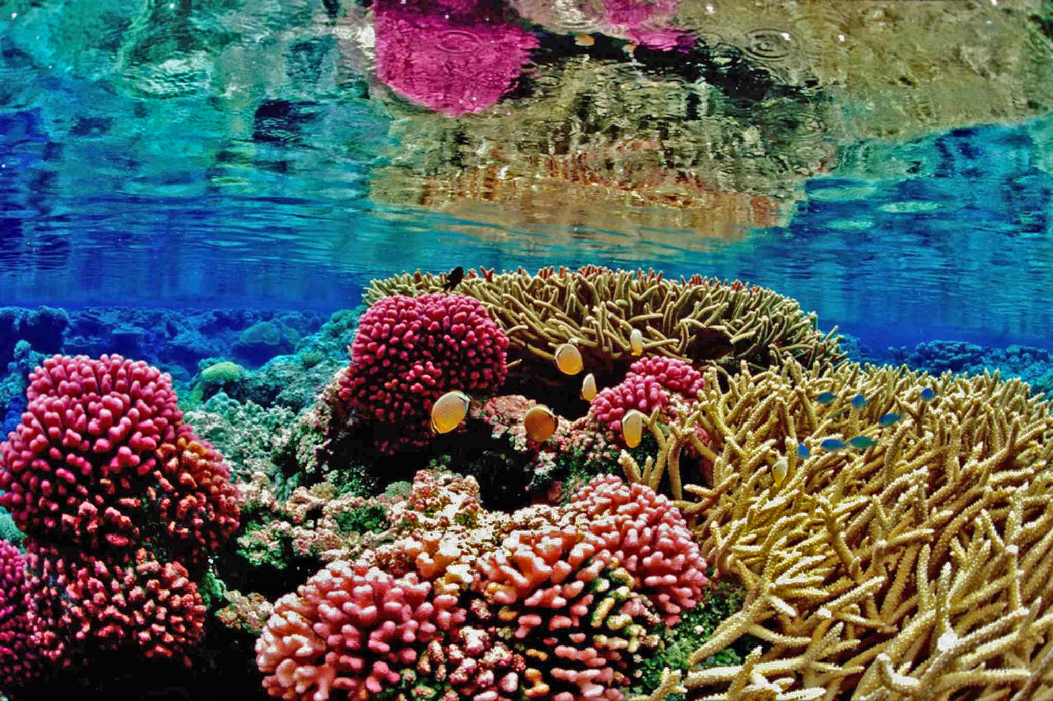 recife-1690647.jpg