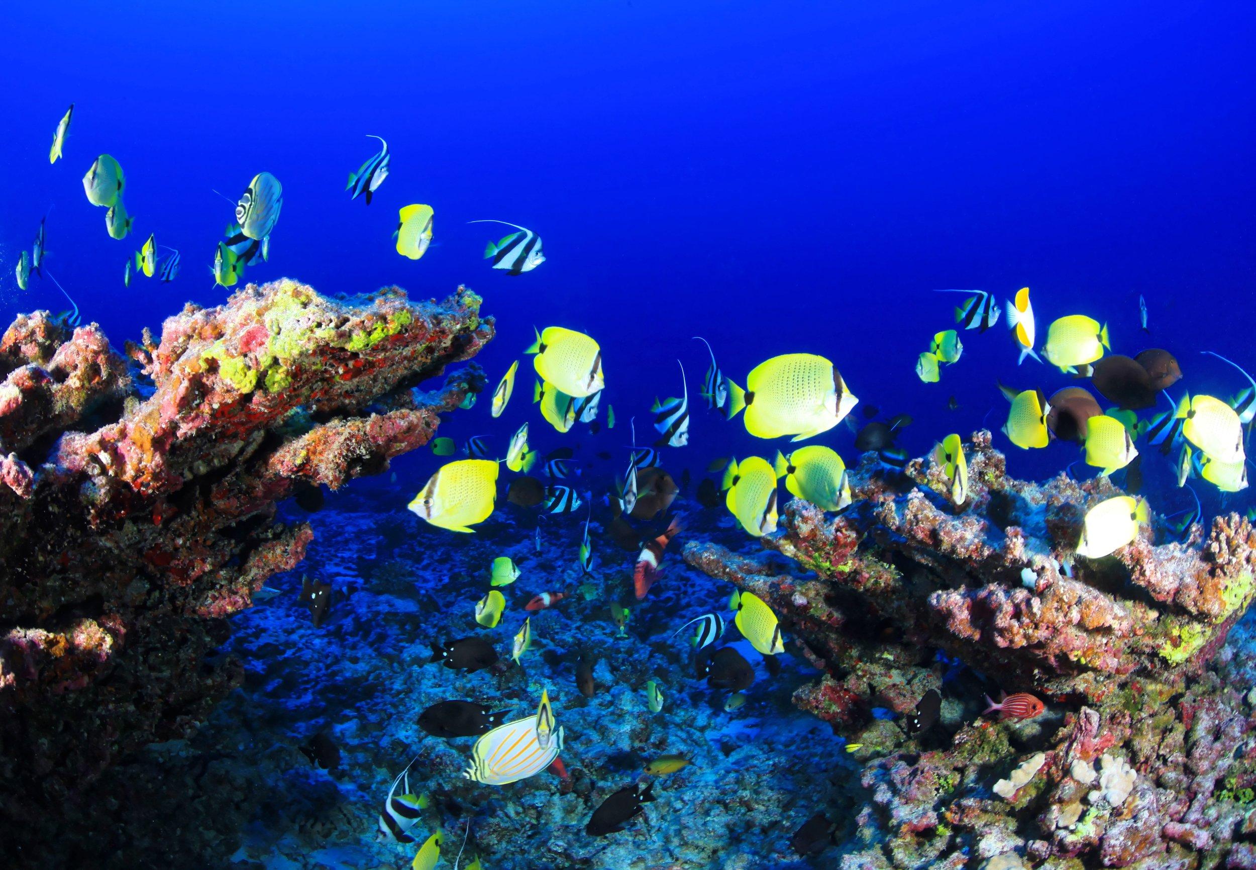 coral-reef-954057.jpg