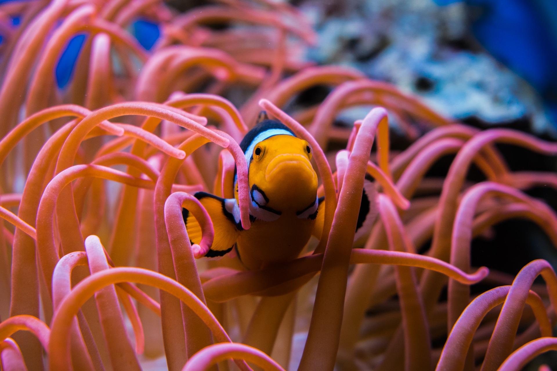 clownfish-3030148_1920.jpg