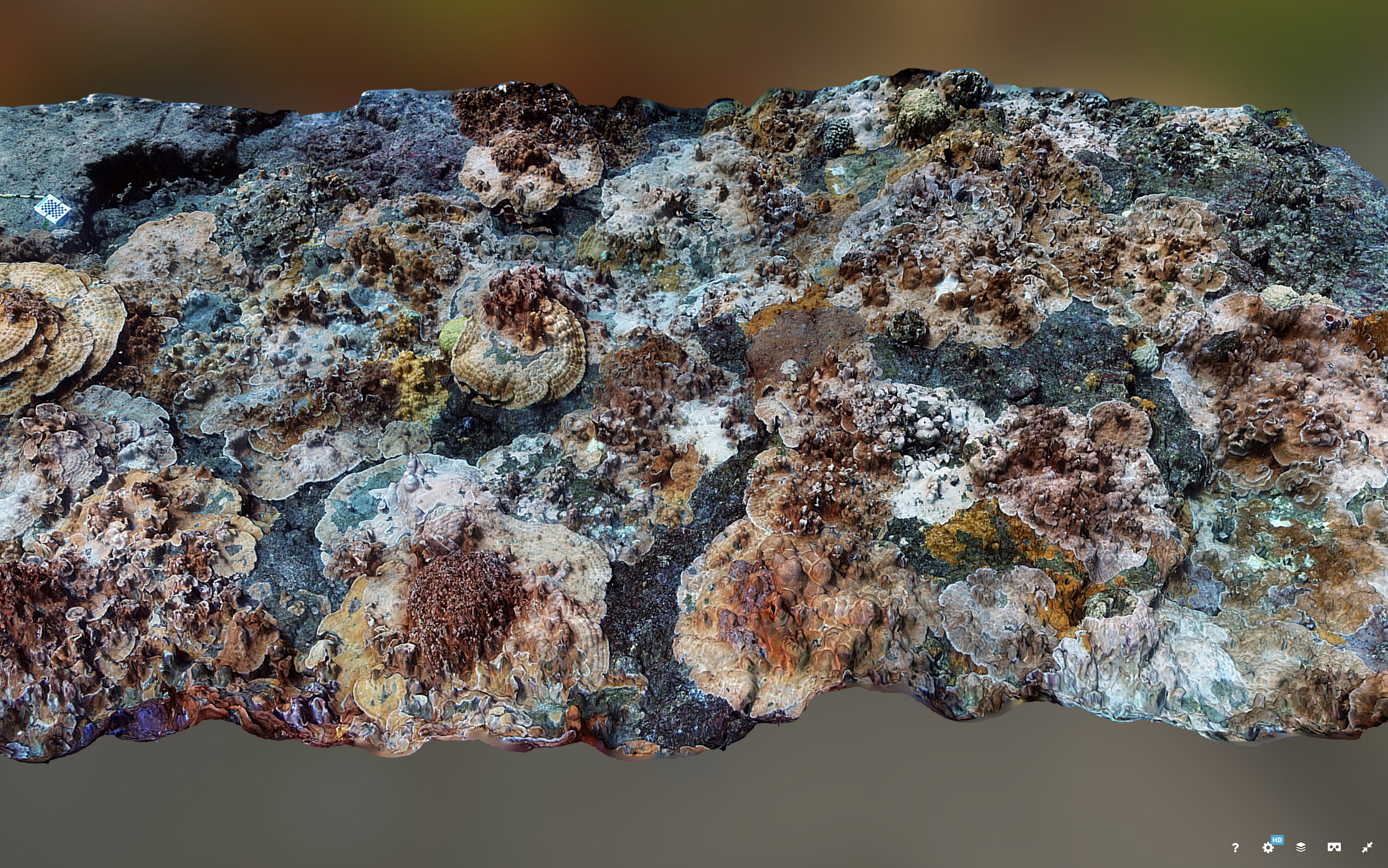 Photo of Coral Reef Model (Image Courtesy of Dr. John Burns, via  Sketchfab )