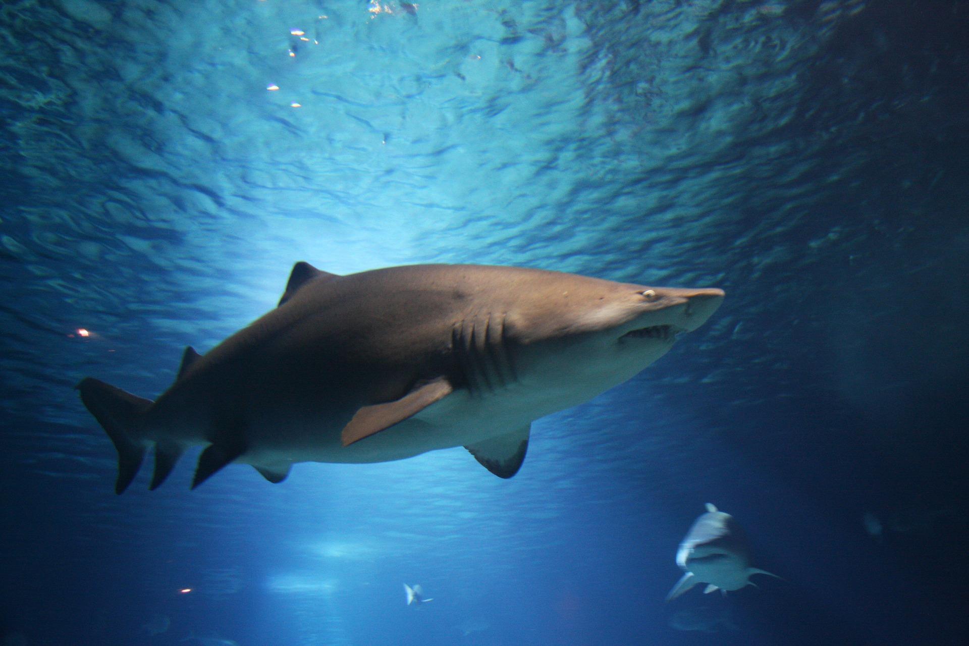 shark-220748_1920.jpg