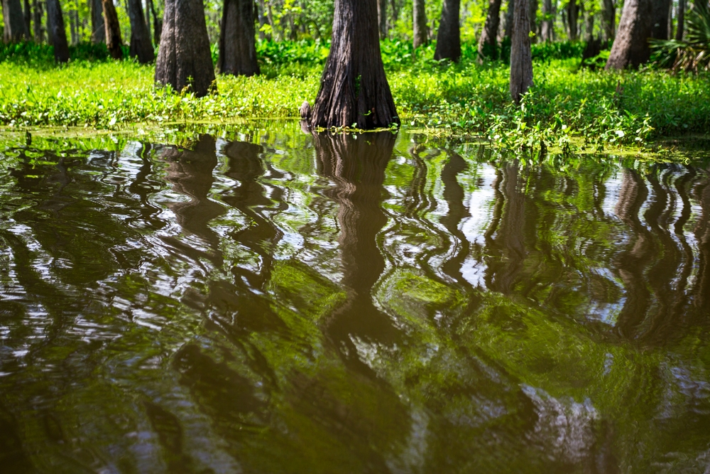 new-orleans-swamp-tour-paddle-kayak-outdoors (5).JPG