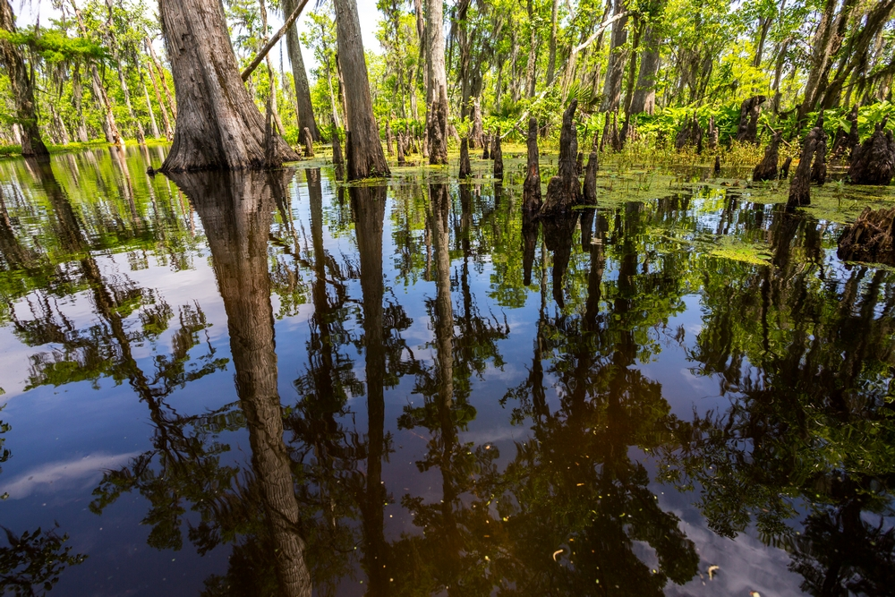 new-orleans-swamp-tour-paddle-kayak-outdoors (6).JPG