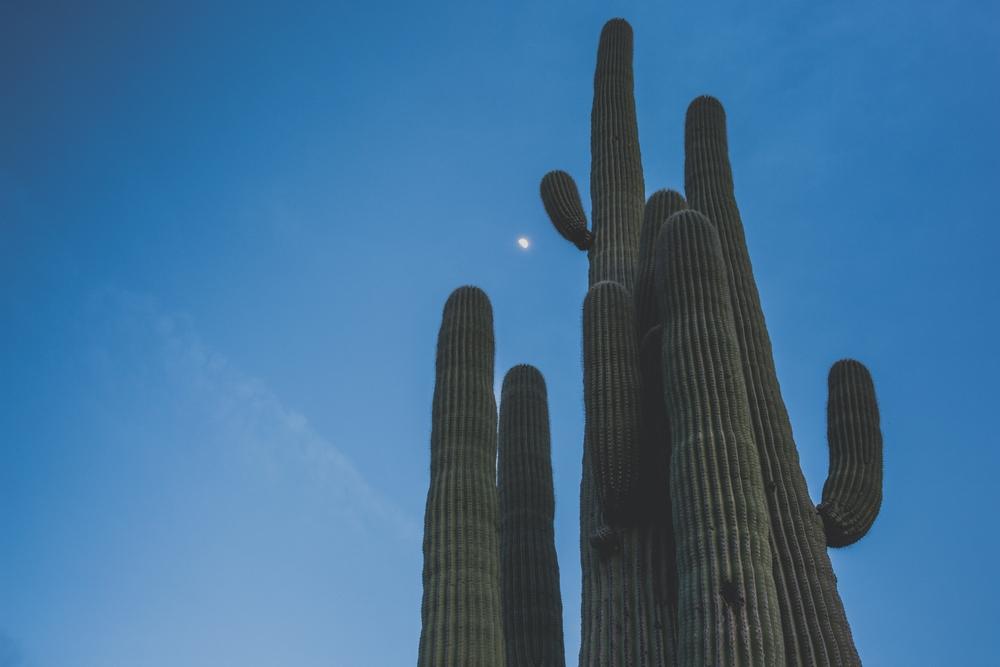 saguaro-cactus-tucson-arizona-desert.JPG