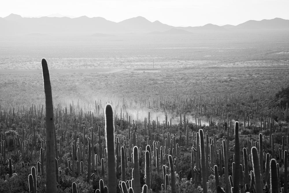 saguaro-desert-arizona-cactus.JPG