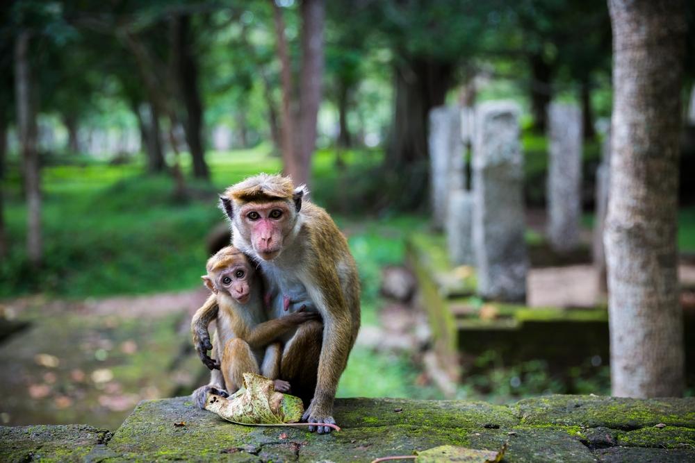 sri-lanka-asia-travel-backpacking-blog-travel-adventure (36).JPG