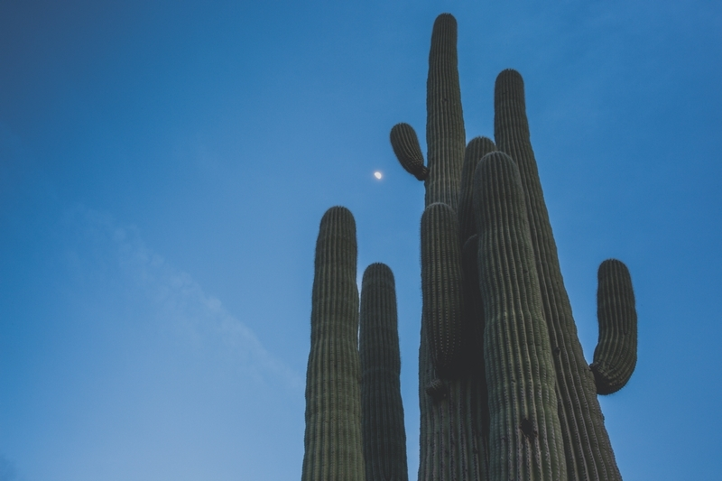 Returned to  Tucson  with my parents in early February for the big ol' gem show… and naturally visited Saguaro National Park. Love that place!