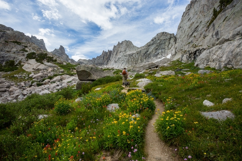 wind-river-range-wyoming-wildflowers-backcountry-hiking-backpacking.JPG