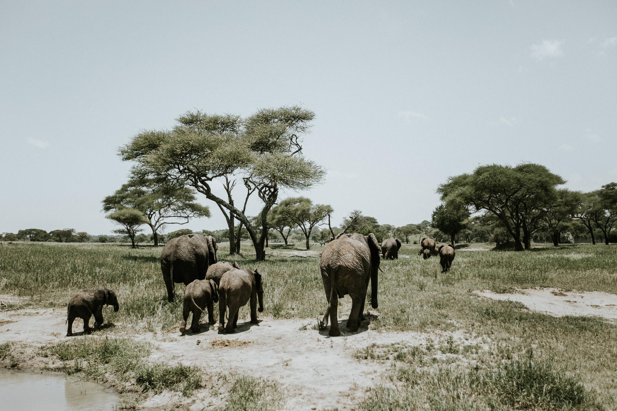 Safari-81.jpg