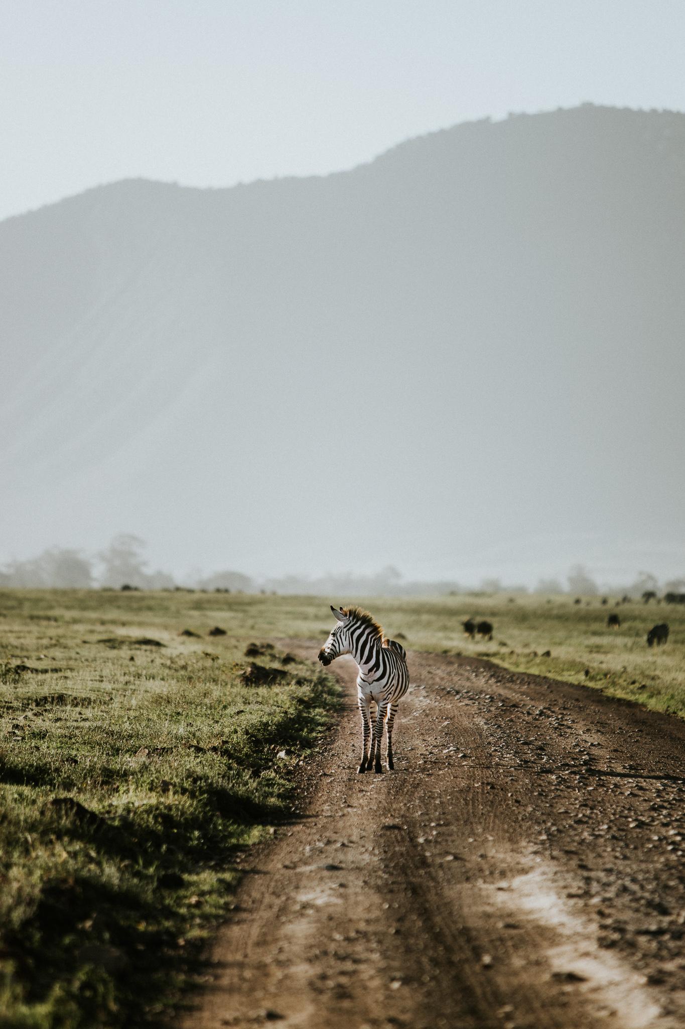 Safari-116.jpg