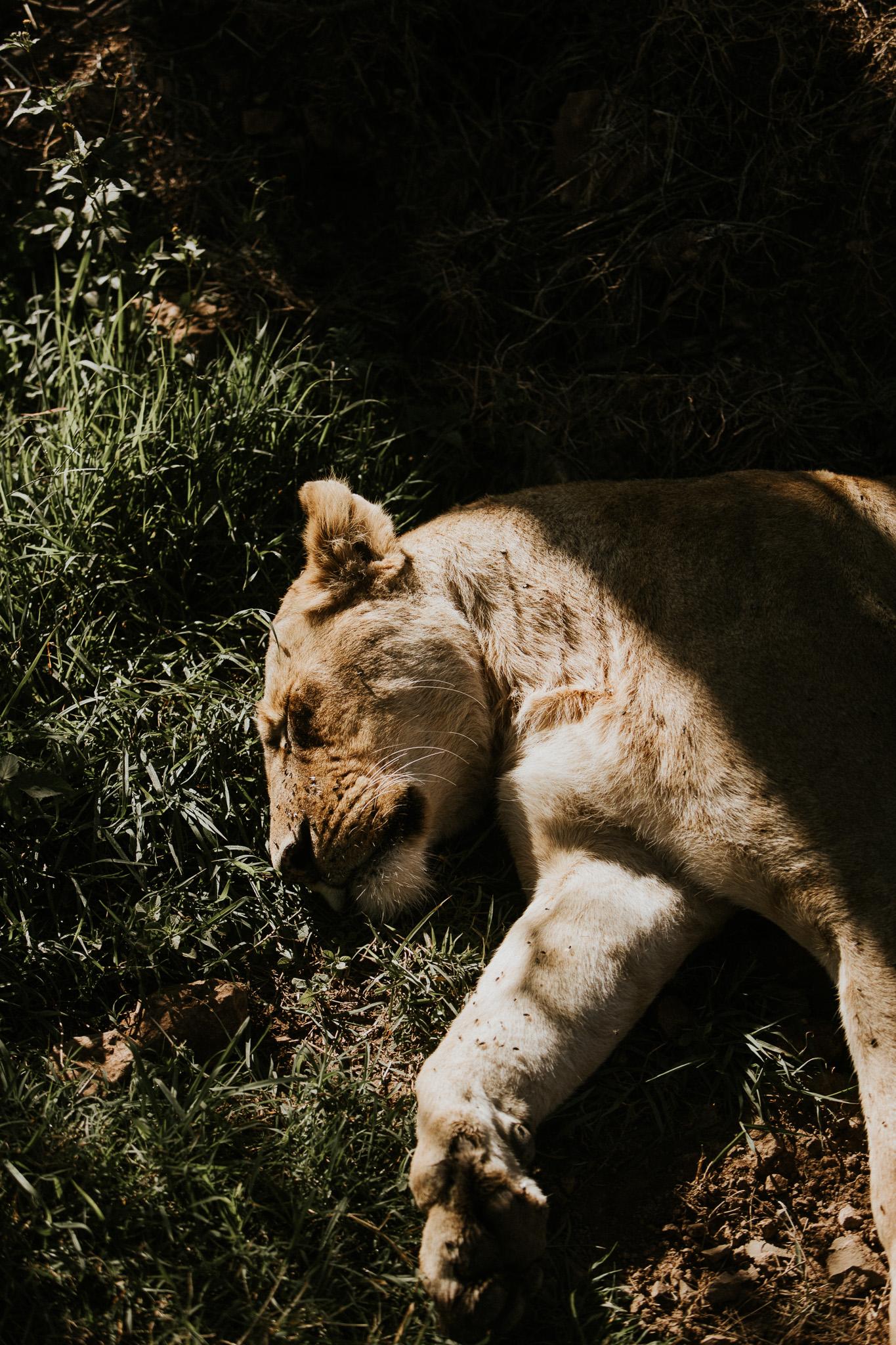 Safari-138.jpg