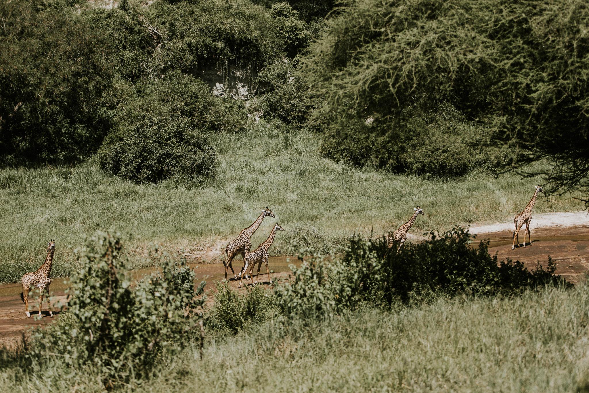 Safari-71.jpg