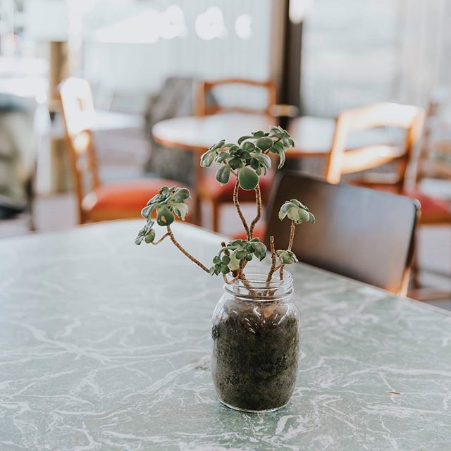 Is anyone else obsessed with plants like I am? 🙋🏻♀️🌱 I seriously love how @harleystreetcafe have cute little succulents on every table ☕️