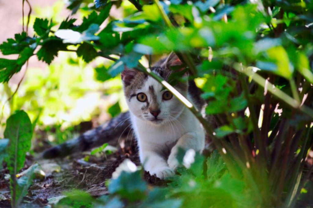 Small cat hiding in the garden bushes