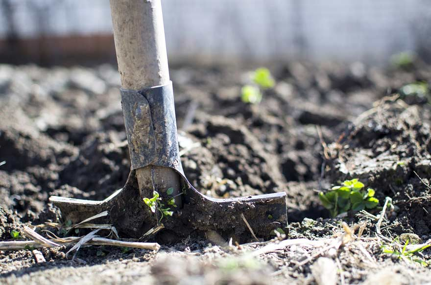 Garden shovel in the ground