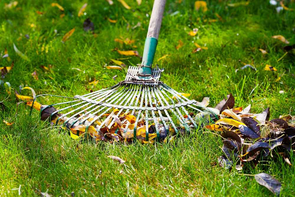 Raking leaves on green grass