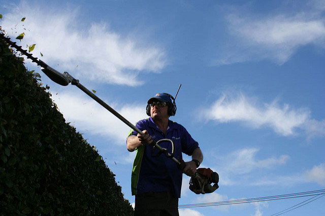Crewcut operator trimming hedge with long trimmer
