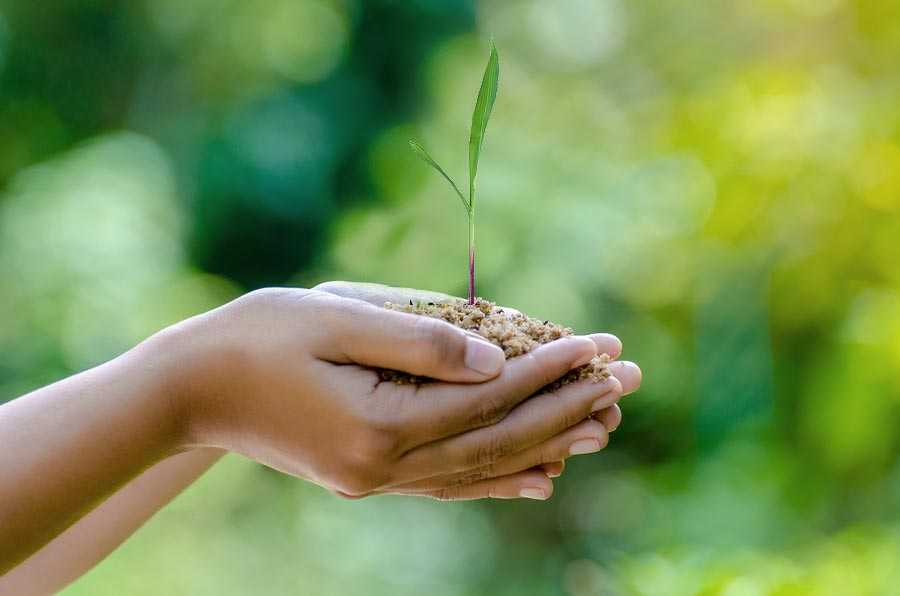 Two hands holding grass seedling in front of blurred background