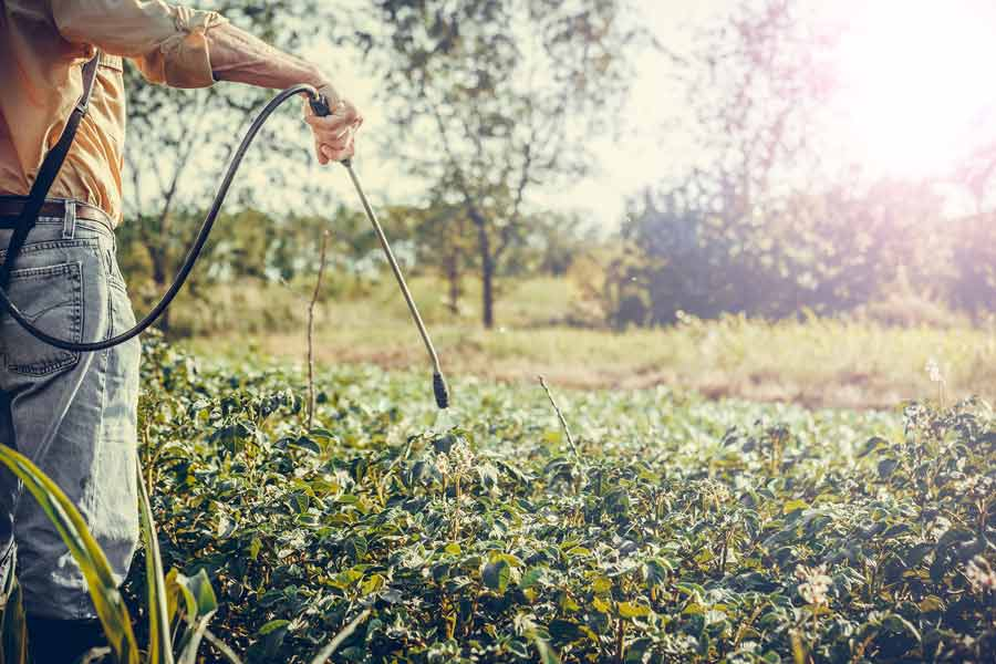 pesticide-spraying.jpg