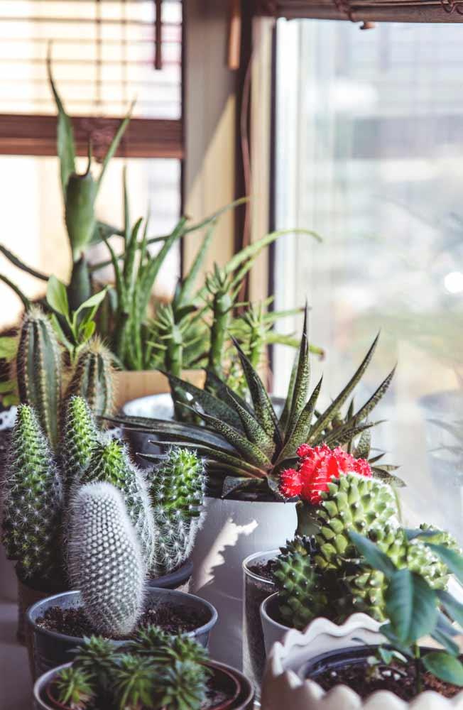 Put plants sitting on windowsill