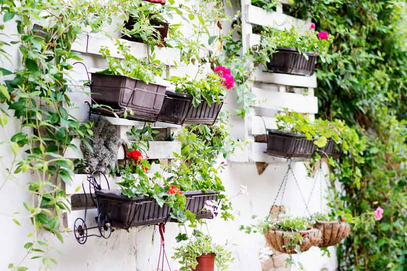 Pot plants hanging on garden wall
