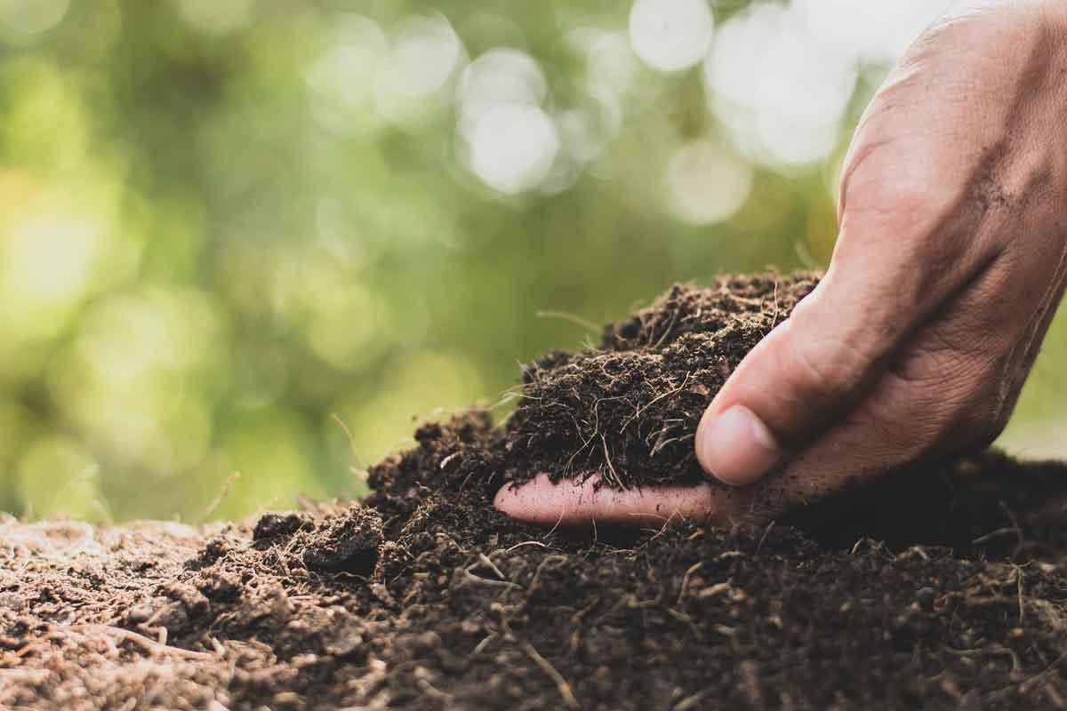 Soil-Planting.jpg